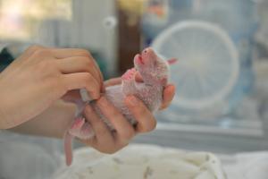 Γιατί αυτή η γέννηση ενός μωρού πάντα είναι ιστορική! [pics]