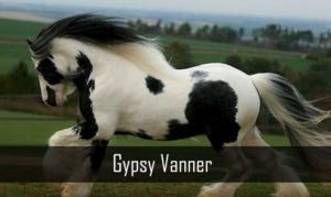 24 άλογα με τα πιο σπάνια χρώματα [vid]