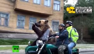 Αρκούδα σε μηχανάκι στους δρόμους της Ρωσίας! [vid]