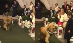 Έκανε τον σκύλο του κουμπάρο στον γάμο του!