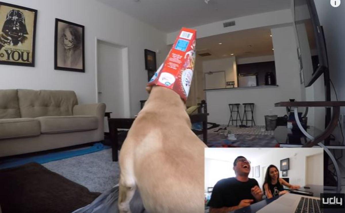 Έβαλε κάμερα στο σπίτι του να δει τι κάνει ο σκύλος του
