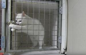 Πανέξυπνη γάτα δραπετεύει από το κλουβί της σε δευτερόλεπτα [vid]