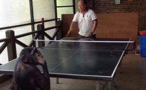 Κανείς δεν παίζει καλύτερο πινγκ πονγκ από αυτόν τον πίθηκο