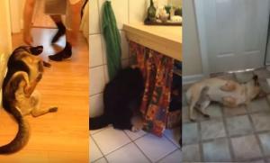 Αυτά τα σκυλιά δεν θέλουν με τίποτα να κάνουν μπάνιο!