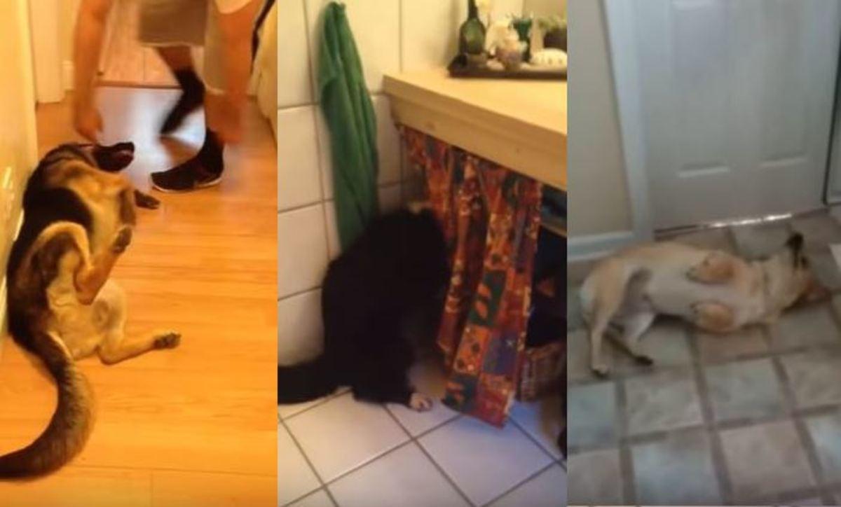 Αυτά τα σκυλιά δεν θέλουν με τίποτα να κάνουν μπάνιο! | Newsit.gr