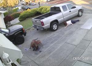Πιτ-μπουλ »γκρεμίζουν» την ιδιοκτήτριά τους και δολοφονούν με μανία μια γάτα [vid]