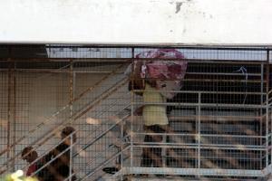 «Αιτούντες άσυλο αντιμετωπίζουν δυσκολία στην έκδοση ΑΜΚΑ, ΑΦΜ και κάρτας ανεργίας»