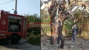 Πάτρα: Η φωτιά στα δέντρα απείλησε πολυκατοικία! [vid]