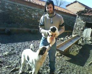 Φλώρινα: Νεκροί δύο ελληνικοί ποιμενικοί σκύλοι από δηλητηριασμένα δολώματα