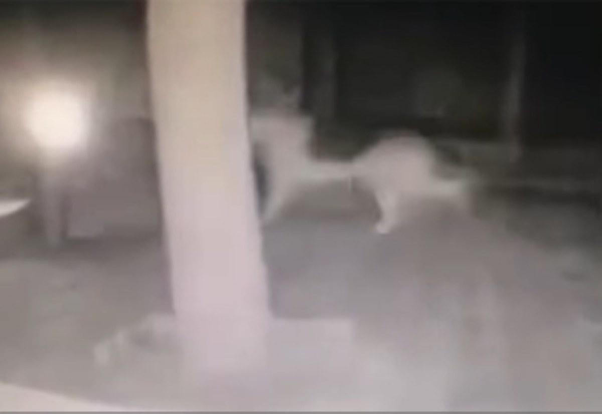 Η αντίδραση των σκύλων λίγο πριν το σεισμό! [vid]