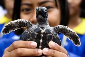 Ταϊλάνδη: Απελευθέρωσαν 1.066 χελώνες στη θάλασσα για τα γενέθλια του βασιλιά τους [pics]