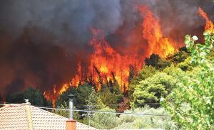 Ζάκυνθος: Οικολογική καταστροφή από τις μεγάλες φωτιές – Ψάχνουν τους εμπρηστές [pics]