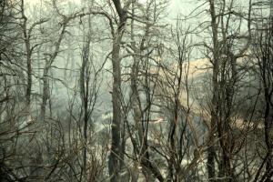 Ζάκυνθος: Σε κατάσταση έκτακτης ανάγκης το νησί