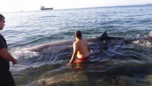 Κρήτη: Αυτή είναι η φάλαινα των 5 μέτρων που βγήκε στην ακτή – Η εξήγηση των ειδικών [pics]