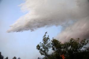 Χαλκιδική: Ζητούν να κηρυχθεί σε κατάσταση έκτακτης ανάγκης η περιοχή της φωτιάς
