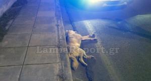 Λαμία: Τον έσωσε το κράνος – Σκοτώθηκε ο σκύλος που πετάχτηκε στη μηχανή του [pics]