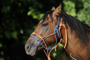 Χανιά: Επιβεβαιώθηκε κρούσμα πυρετού του Δυτικού Νείλου σε άλογο!