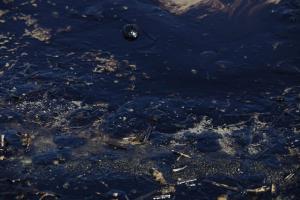 Σαρωνικός: Δραματική προειδοποίηση! Η πετρελαιοκηλίδα προκαλεί στρες