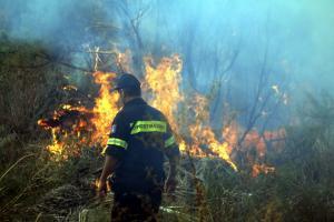 Καβάλα: Υπό έλεγχο η μεγάλη φωτιά – Ολονύχτια μάχη κοντά σε οικισμούς που πλησίασε απειλητικά!