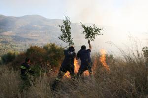 Χαλκιδική: Φωτιά έκανε στάχτη 1.200 στρέμματα – Σε επιφυλακή η πυροσβεστική στην περιοχή Μόλα Καλύβα!