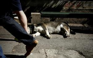 Καταδίκη συνταξιούχου για κακοποίηση σκύλου!
