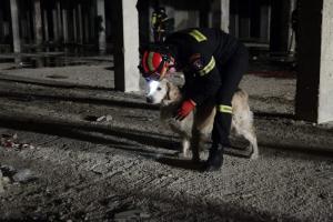 Αιγιάλεια: Αίσιο τέλος για τον άνδρα που είχε εξαφανιστεί – Τον έσωσε ο σκύλος του