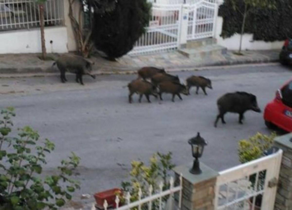 Θεσσαλονίκη: Βγήκε στο μπαλκόνι και είδε στο δρόμο αυτή την απίθανη εικόνα – Η εξήγηση μετά την έκπληξη [pics, vid] | Newsit.gr