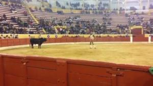 Σοκαριστικό βίντεο – Νεκρός ο ταυρομάχος που προκάλεσε ταύρο με γυμνά χέρια [vid]