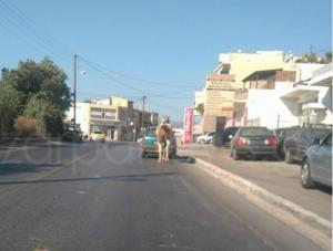 Χανιά: Έσερνε άλογο στον δρόμο με τον κοτσαδόρο – Οργή για τον οδηγό του αυτοκινήτου [pic]