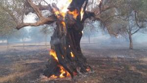 Δυτική Αχαΐα: Συνεχείς αναζωπυρώσεις στο μέτωπο της φωτιάς – Ανυπολόγιστη καταστροφή [pics, vids]