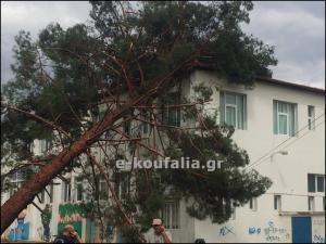 Πέλλα: Πτώσεις δέντρων σε σπίτια – Αποκαλυπτικές εικόνες καταστροφής μετά την καταιγίδα [pics, vid]