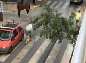Κατερίνη: Η απίθανη εικόνα του δρόμου που κάνει το γύρο των social media – Άφωνοι οι οδηγοί [pics]