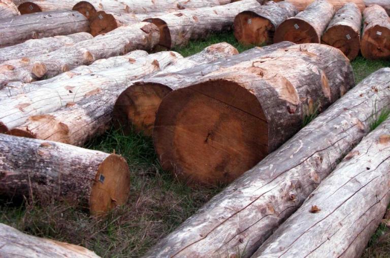 Φθιώτιδα: Έπεσε το δέντρο που έκοβε και τον πλάκωσε! | Newsit.gr