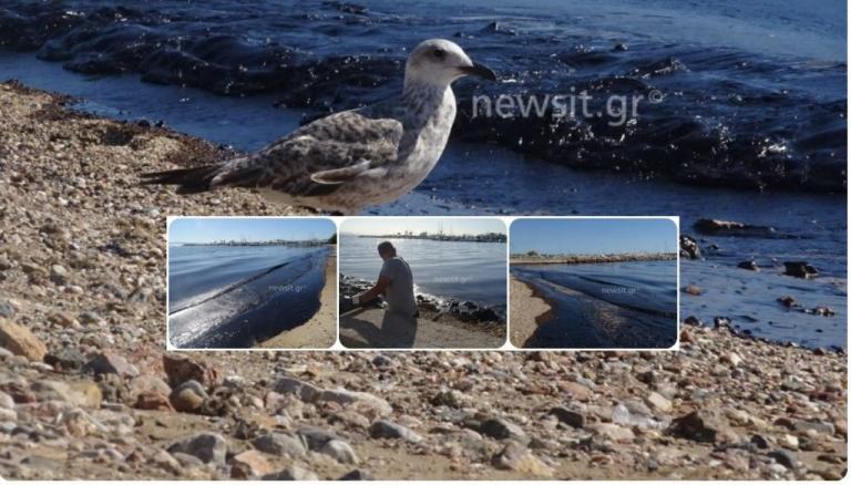 Πετρελαιοκηλίδα: «Μαχαιριά» οι εικόνες στην Γλυφάδα! | Newsit.gr