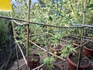 Κρήτη: Αυτά καλλιεργούσε στο σπίτι του ένας 30χρονος