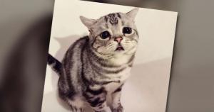 Αυτή η είναι η πιο λυπημένη γάτα του κόσμου