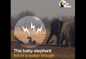 Μαμά ελέφαντας σώζει το εγκλωβισμένο μωρό της