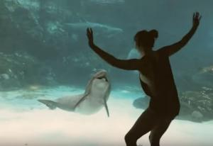 Αυτό το δελφίνι ξεκαρδίζεται στα γέλια με το νεαρό κορίτσι!