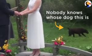 Σκύλος… απρόσκλητος επισκέπτης σε γάμο