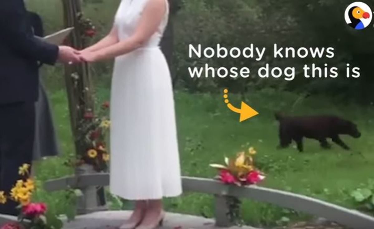Σκύλος… απρόσκλητος επισκέπτης σε γάμο | Newsit.gr