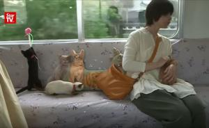Ένα τρένο γεμάτο γάτες! Επιβιβαστείτε!
