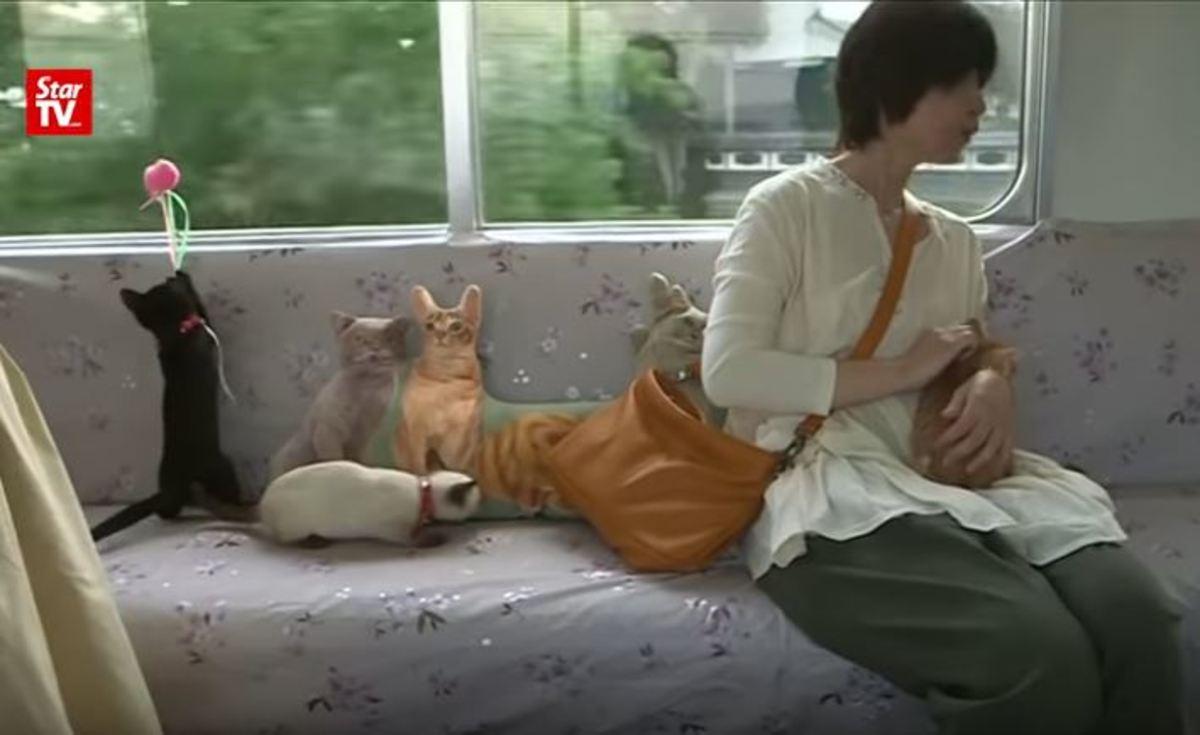 Ένα τρένο γεμάτο γάτες! Επιβιβαστείτε! | Newsit.gr