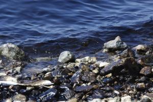 Δεξαμενόπλοιο: Βελτίωση της κατάστασης των ακτών διαπιστώνει ο Δήμος Αργυρούπολης – Ελληνικού