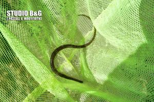 Τροπικό ψάρι βρέθηκε στο Ναύπλιο [pics]