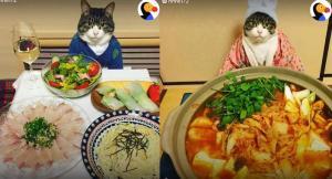 Αυτή η γάτα δεν…αστειεύεται όταν πρόκειται να γευματίσει με τη «μαμά» του