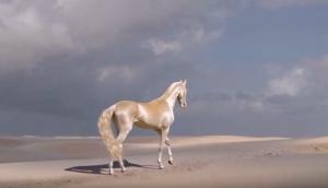 Το πιο όμορφο άλογο του κόσμου είναι σαν πίνακας ζωγραφικής