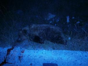 Φλώρινα: Σκληρές εικόνες με νεκρή αρκούδα στην άσφαλτο – Παγίδα θανάτου ο δρόμος στο Αμύνταιο [pics]