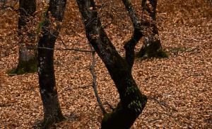 Ήπειρος: Το δάσος στα σύνορα έκρυβε «ένοχα» μυστικά – Οι αστυνομικοί δεν βρήκαν ναρκωτικά – Οι εικόνες που δόθηκαν στη δημοσιότητα [pics]