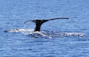 Δελφίνια και φάλαινες ζουν σε «ανθρώπινες» κοινωνίες! Το babysitting και το… κουτσομπολιό