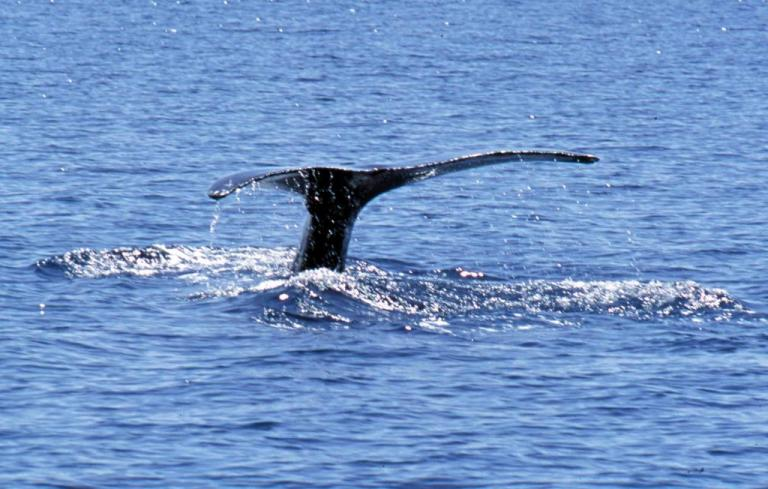 Δελφίνια και φάλαινες ζουν σε «ανθρώπινες» κοινωνίες! Το babysitting και το… κουτσομπολιό | Newsit.gr